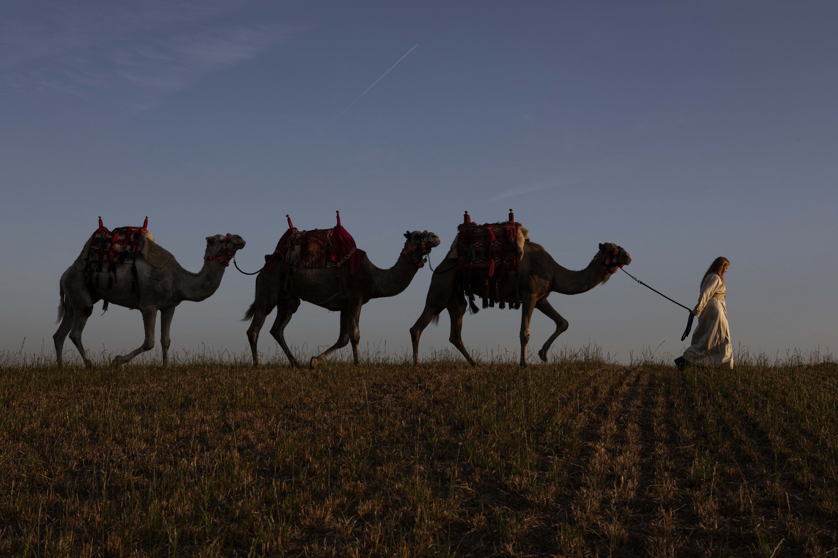 CountryLife_Cannon_Camels_103