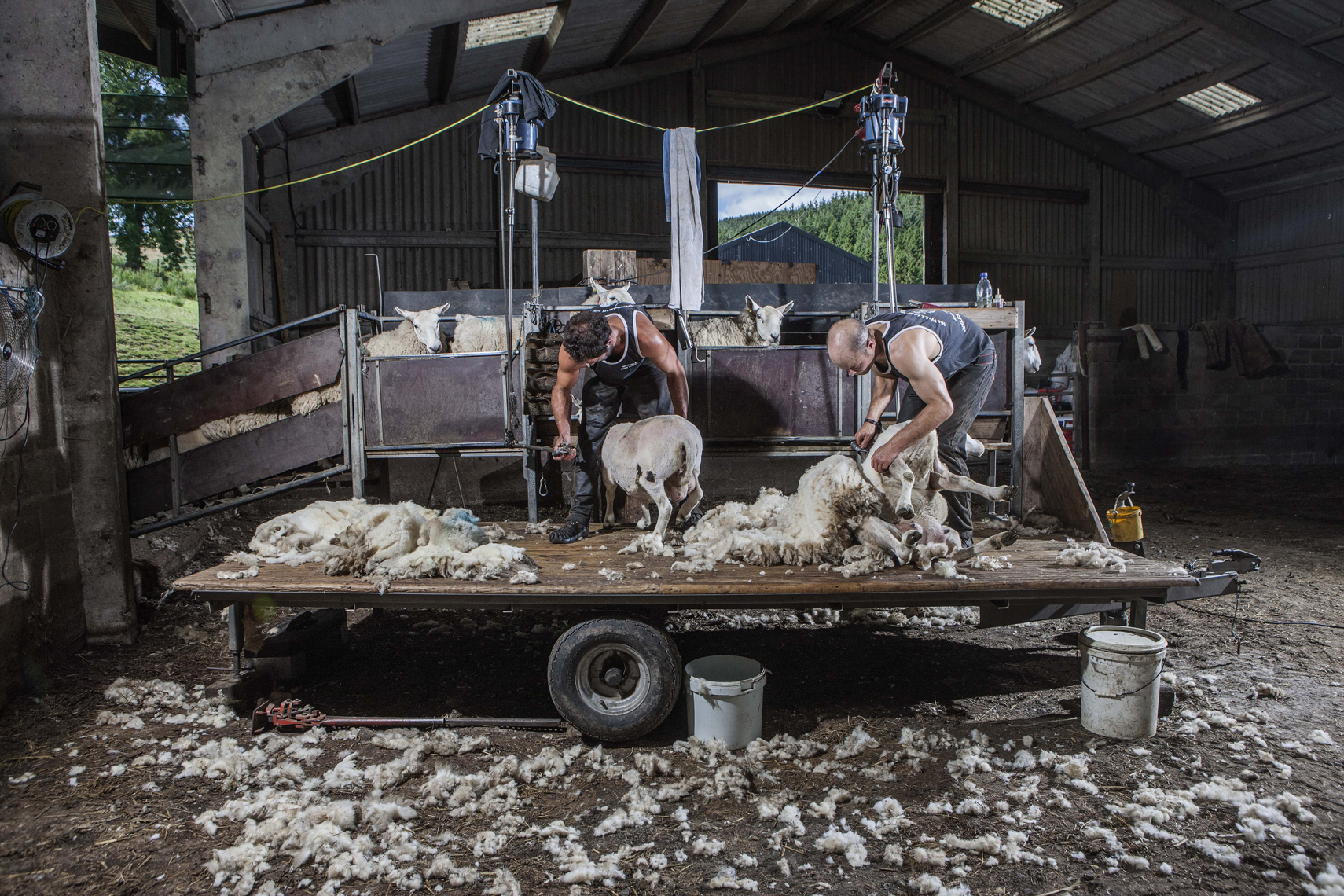 CountryLife_cannon_SheepShearers139