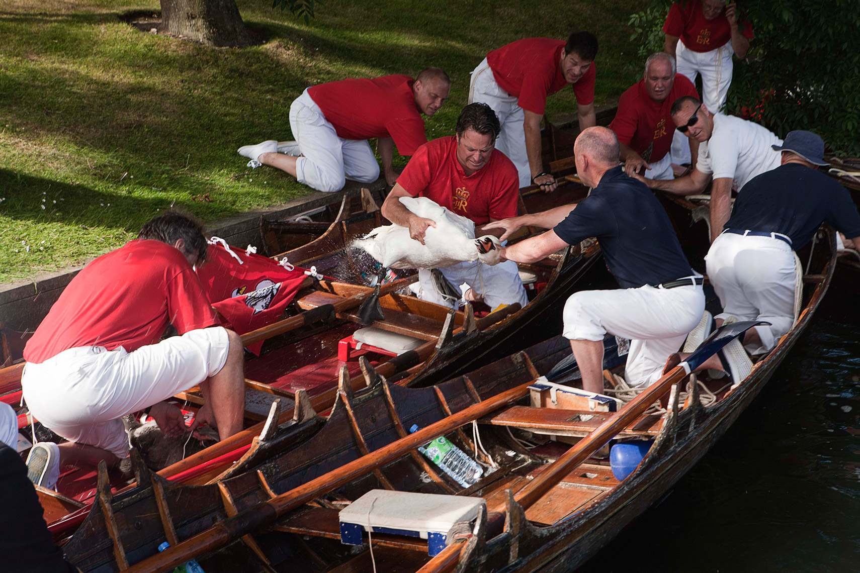 CountryLife_cannon_SwanUpping395
