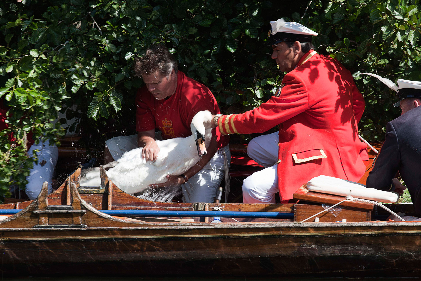 CountryLife_cannon_SwanUpping487
